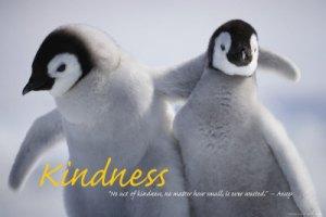 Penguin kindness